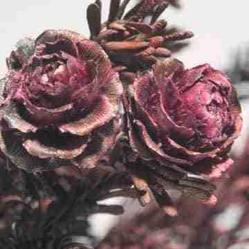 Cómo secar rosas