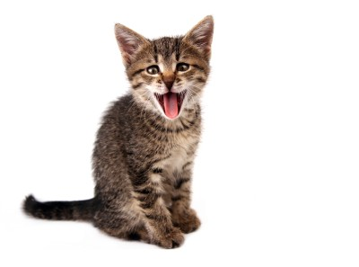 Cómo comunicarte con tu gato (II)