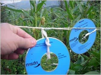 manualidades cds 3
