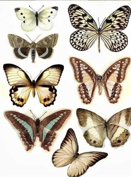 Diy decorar paredes con mariposas de papel bricoinventos - Mariposas para pared ...