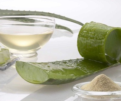 Cómo cultivar aloe vera en casa