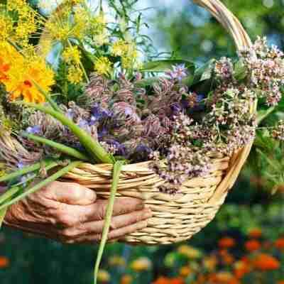 Las mejores plantas y flores para cuidar tu piel