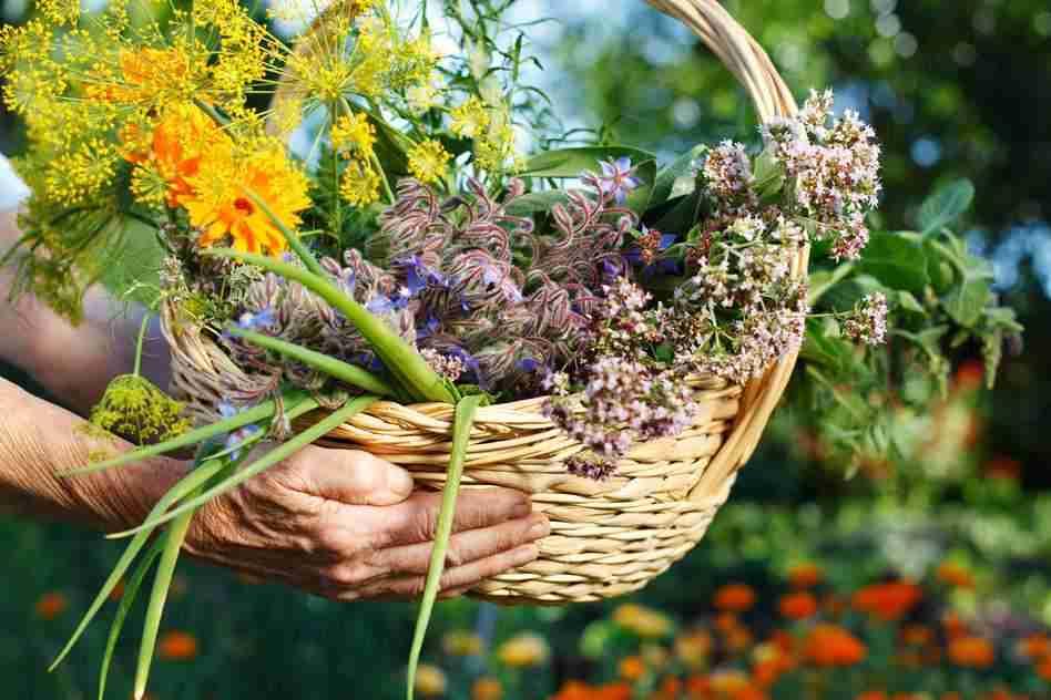 plantas cuidar piel