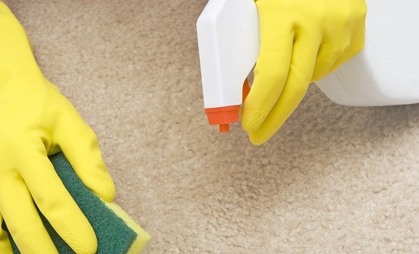 Cómo eliminar el olor de orina de los gatos